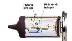 Nguyen-lí-hoat-dong-halogen