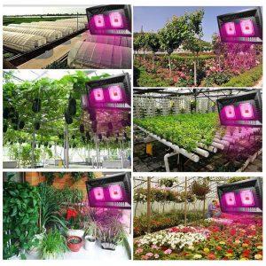 Ứng dụng của đèn pha led trong nông nghiệp